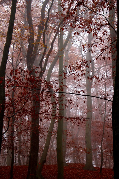 Fog, Forest, Nature, Autumn, Red, Trees, Leaves, Mood