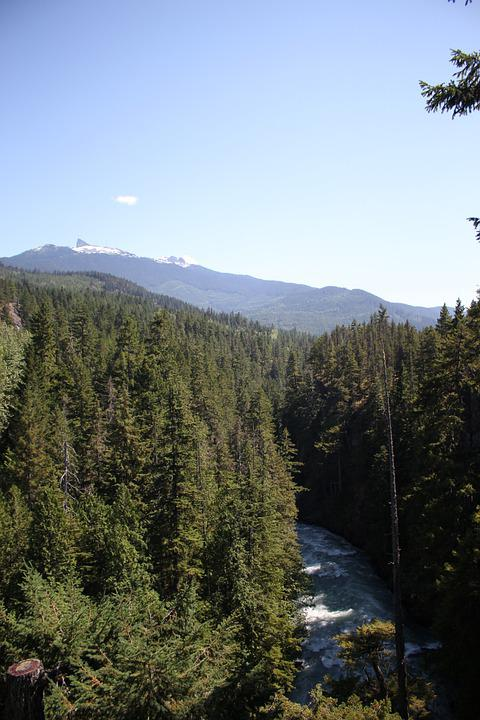 River, Forest, Nature, Mountains, Trees, Stream, Brook
