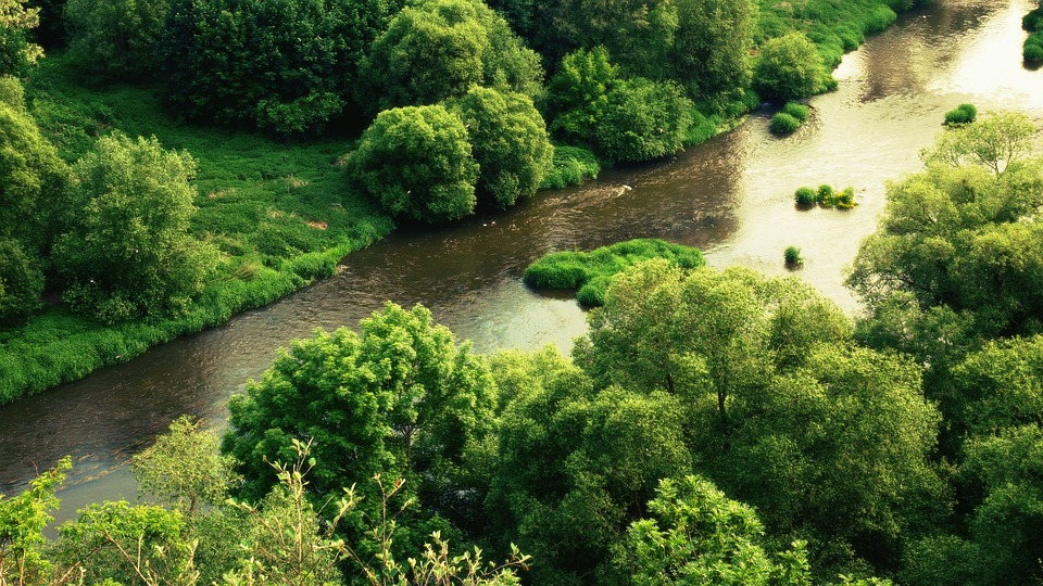 River, Forest Tree, Trees