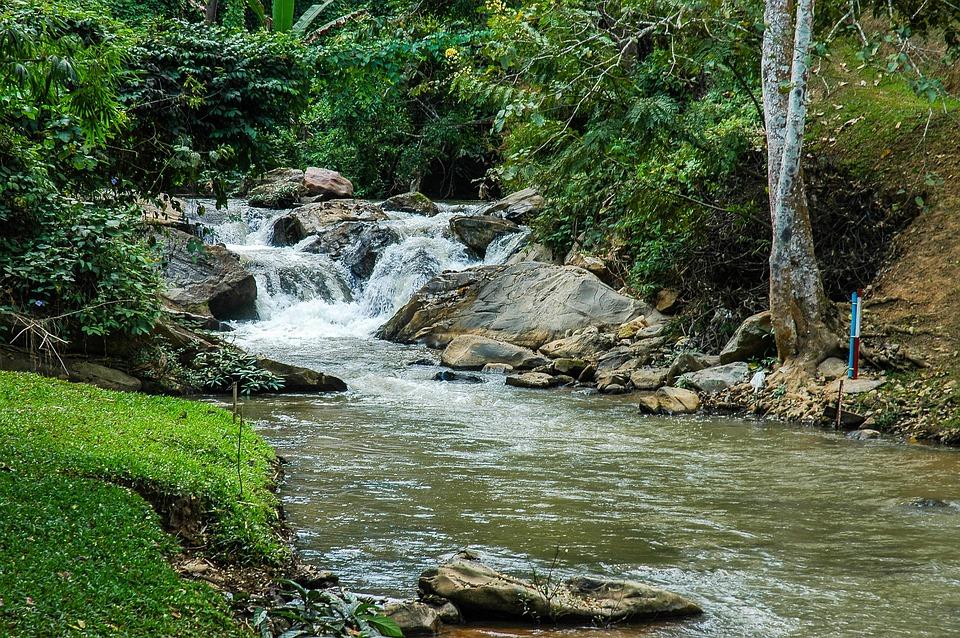 River Landscape, Park, Trees