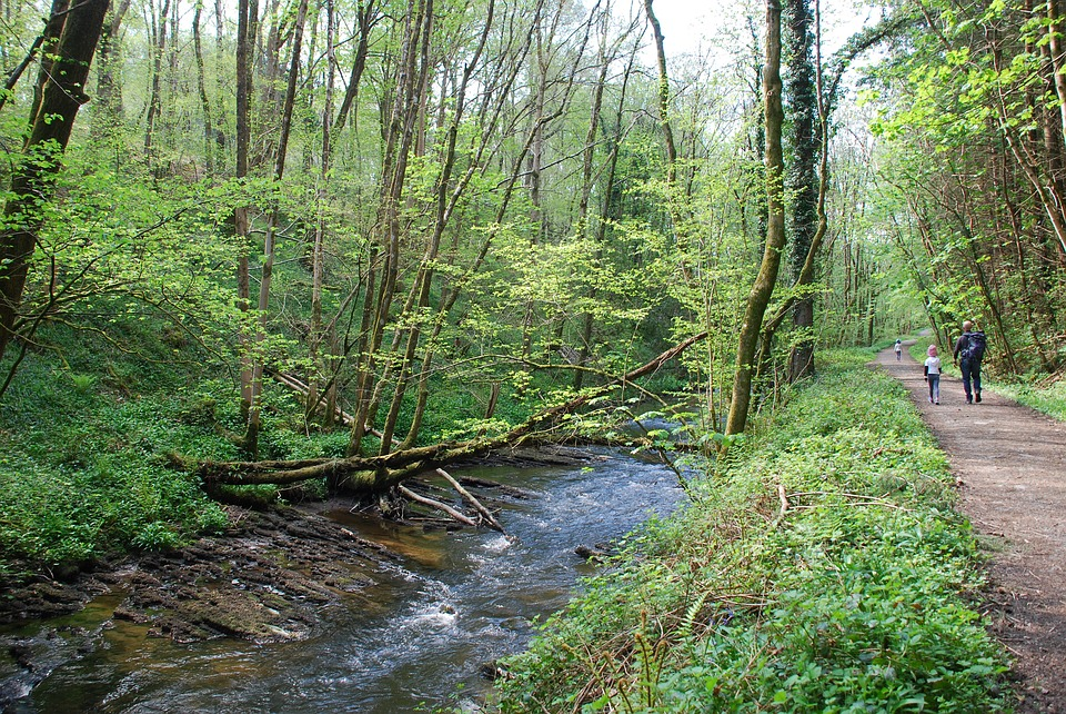 Woodland, Trees, Walk, River, Environment, Outdoor