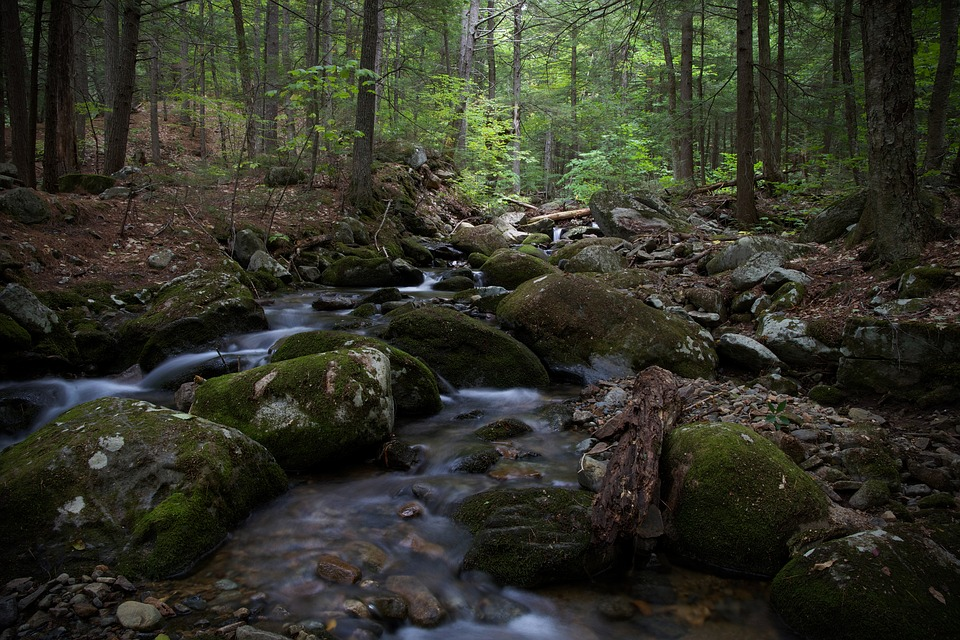 Hiking, Landscape, Nature, Rock, Stream, Trees, Water