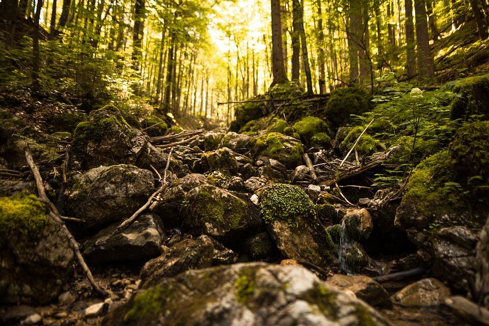 Forest, Rocks, Moss, Landscape, Nature, Woods, Trees