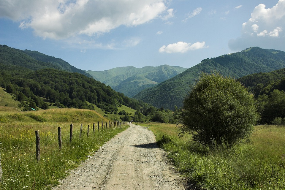 Romania, Landscape, Mountains, Forest, Woods, Trees