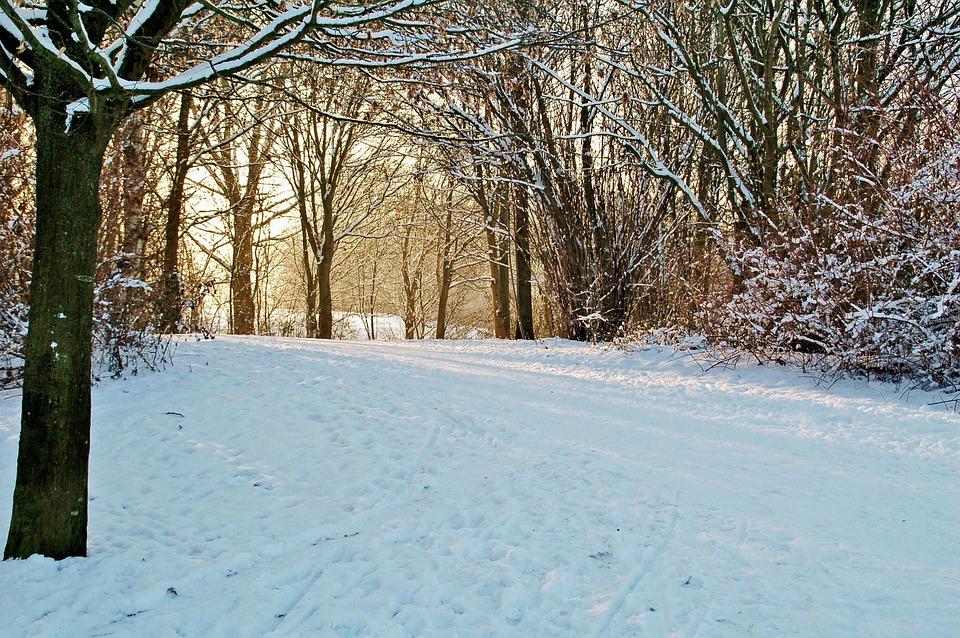 Winter, Snow, Cold, Frost, Season, Park, Trees, Path