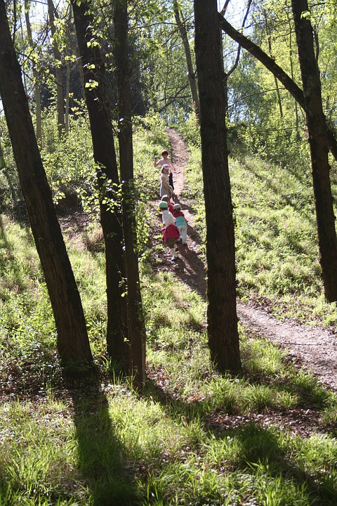 Trees, Silhouettes, Children, Trail