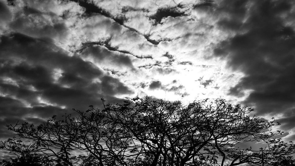 Sky, Trees, Clouds, Nature, Black Man
