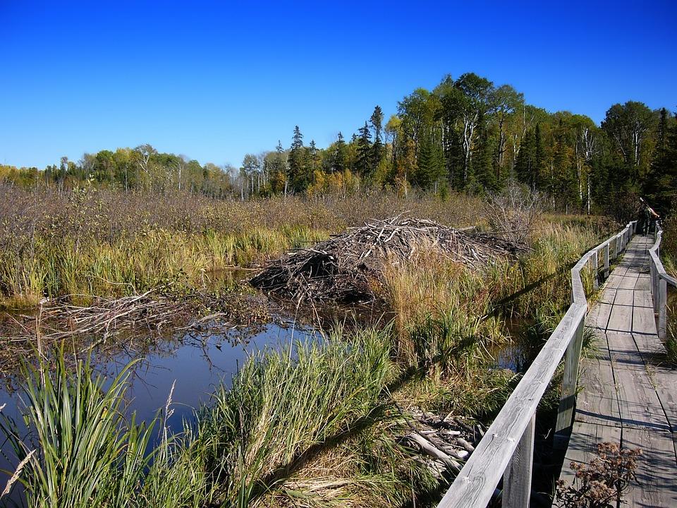 Minnesota, Footbridge, Forest, Trees, Sky, Plants