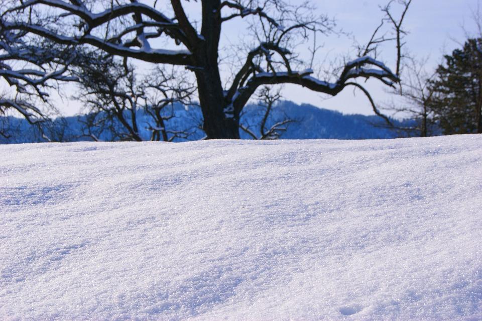 Winter, Tree, Trees, Snow, Sky, Blue