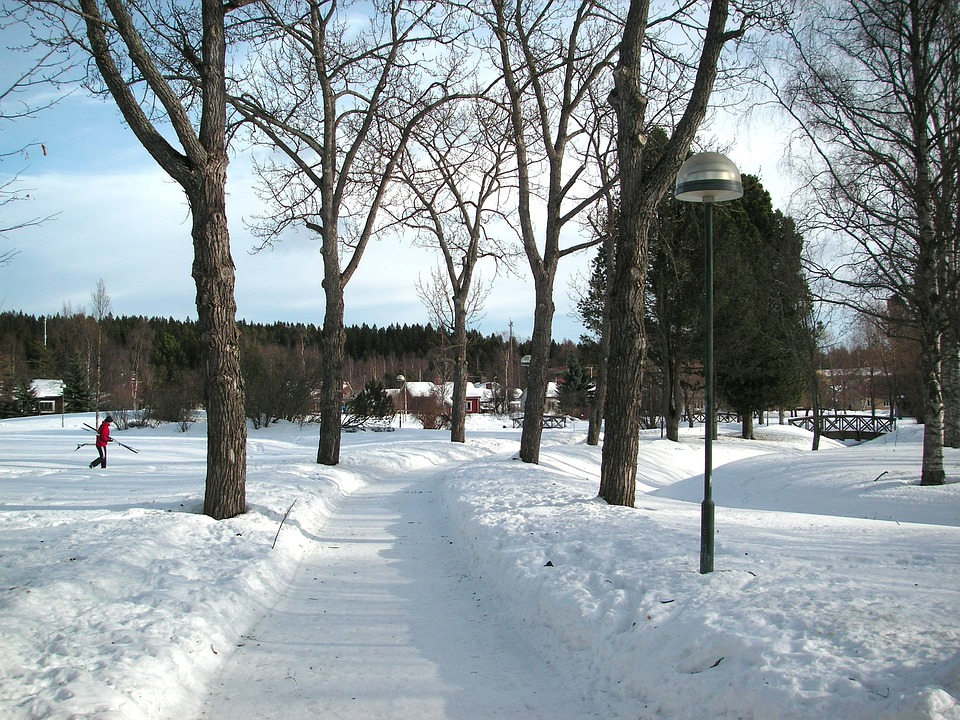 Sweden, Winter, Snow, Ice, Landscape, Forest, Trees