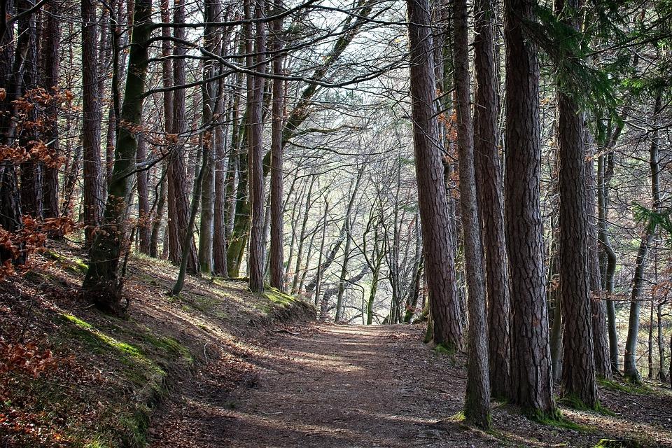 Spring, Forest, Nature, Trees, Away, Frühlingsanfang