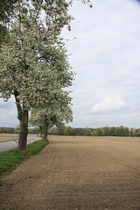 Spring, Trees, Leaves, Bloom, Branch, Landscape, Sky