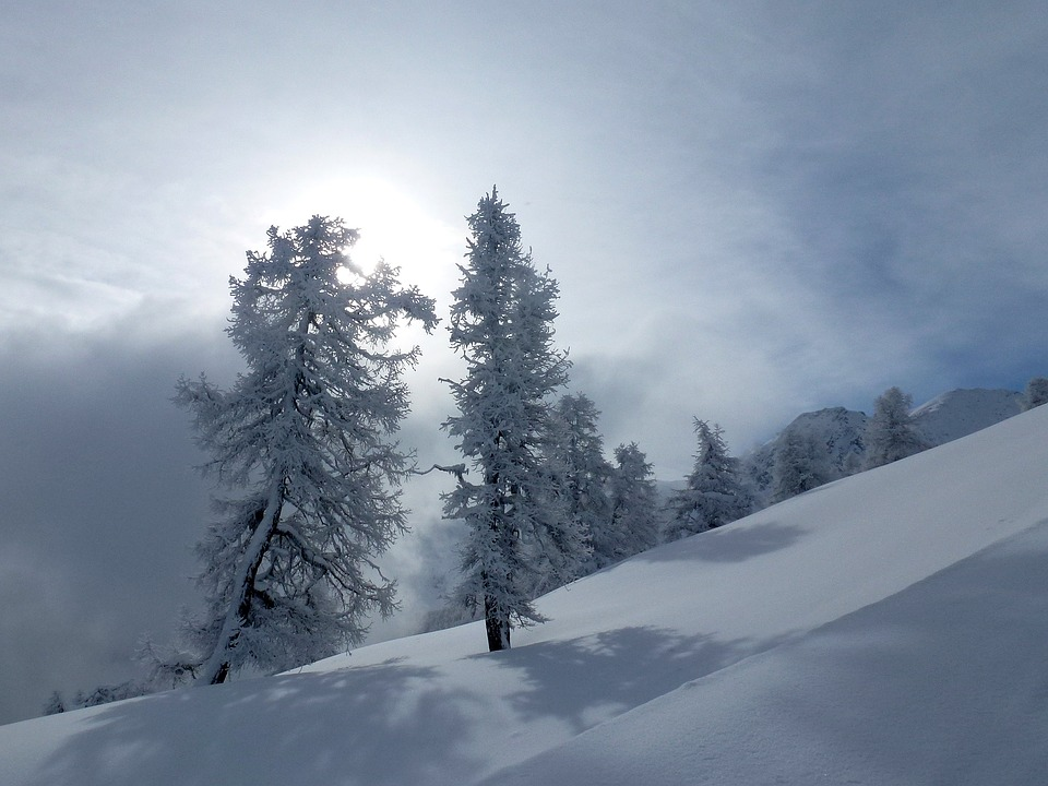 Trees, Gel, Snow, Winter, Mountain, Sun