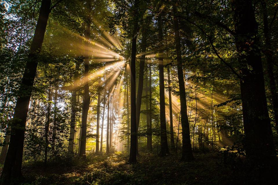 Forest, Autumn, Sunbeam, Nature, Landscape, Trees, Fog