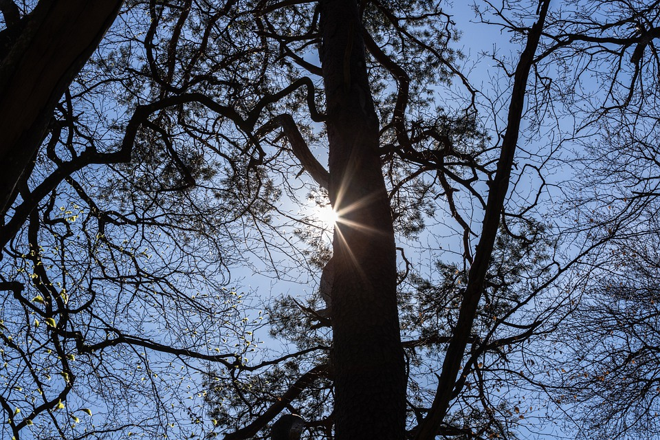 Trees, Forest, Sunlight, Sun, Branches, Woods, Nature