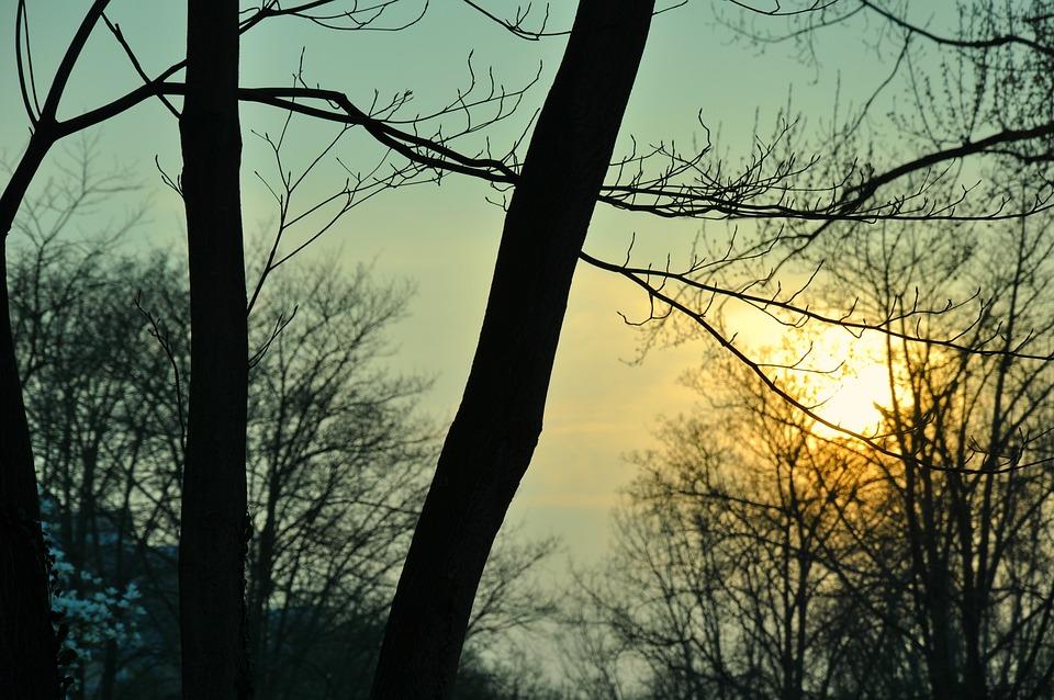 Trees, Sunset, Sky, Nature, Sun, Sunset Background