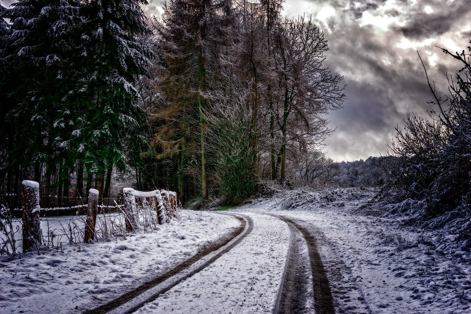 Away, Snow, Trace, Winter, Trees, Winter Mood