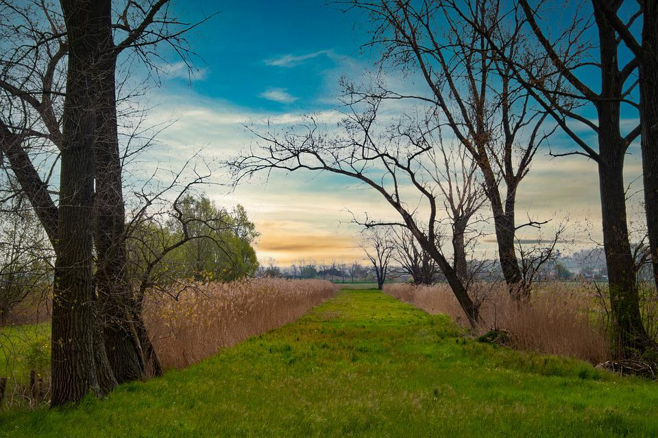 Trees, Countryside, Pathway, Trail, Reed, Outdoor