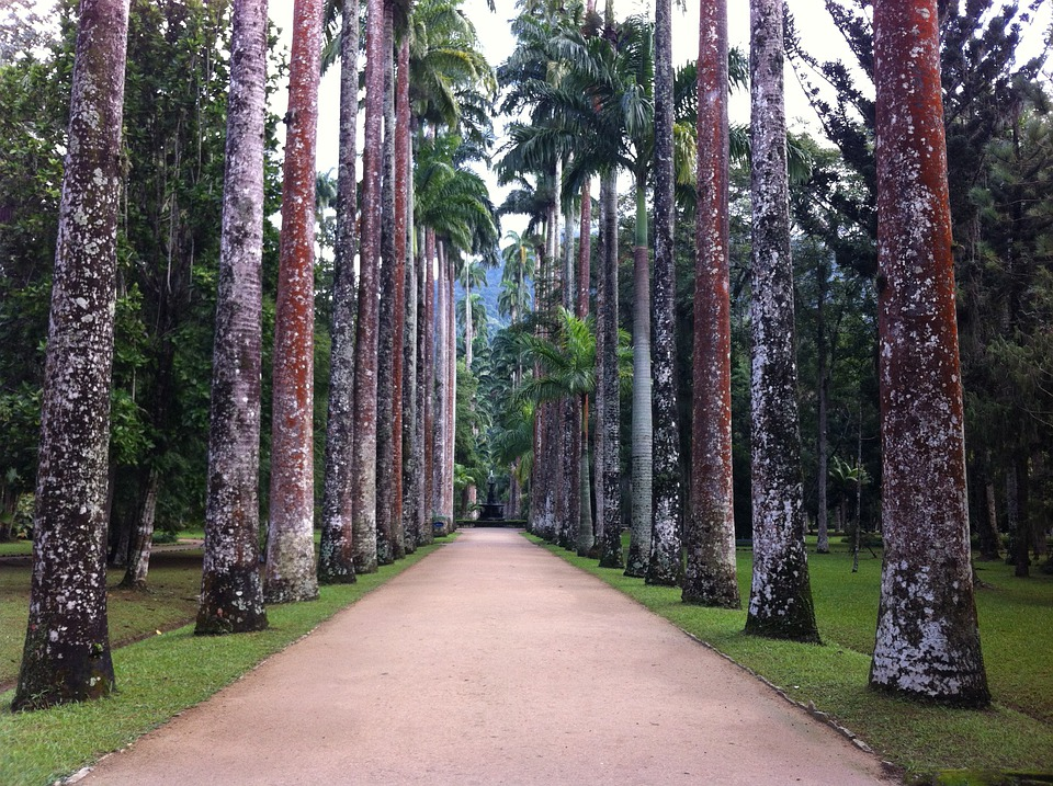 Trees, Botanical Garden, Nature, Forest, Tree