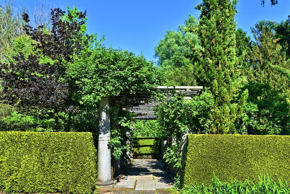 Trimmed Hedge, Hedge, Pillar, Column, Colonnade, Trees