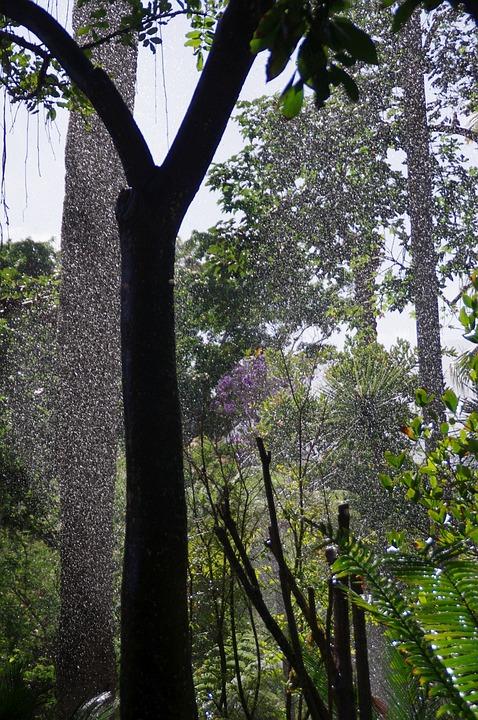 Tropics, Rainforest, Rain, Trees, Drip, Green Leaves