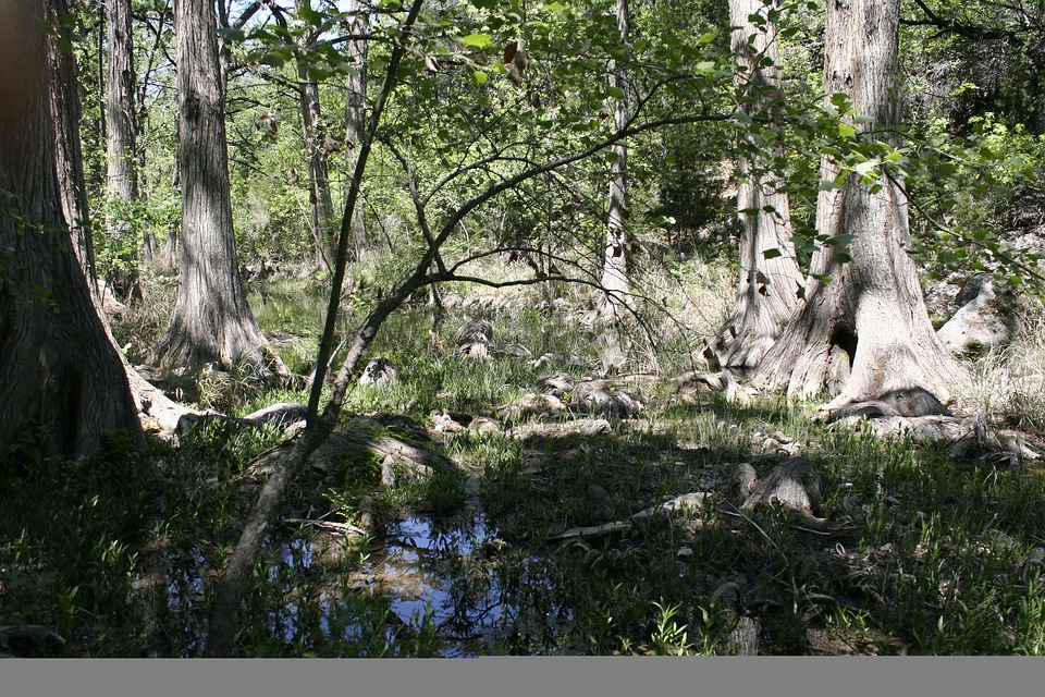 Swamp, Marsh, Trees, Trunk, Forest, Wet Lands, Nature