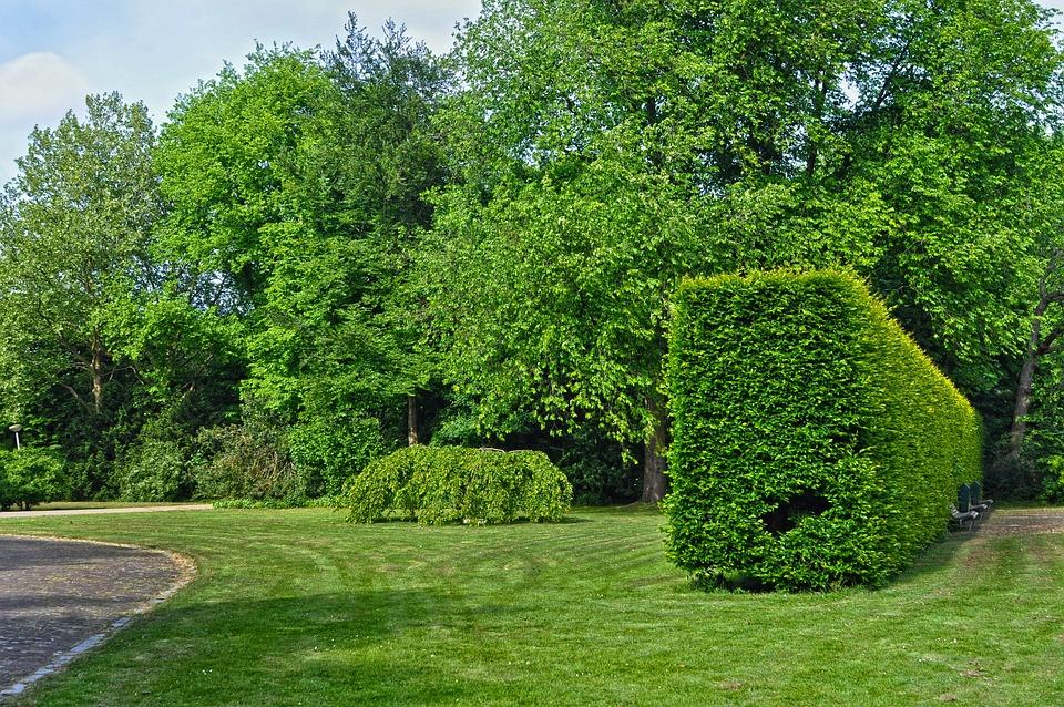 Urban Park, Municipal Park, Green Space, Trees, Lawn