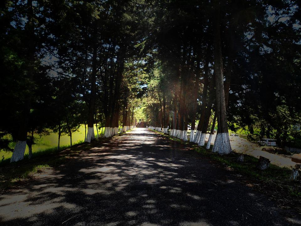 Path, Street, Forest, Via, Lane, Walk, Trees, Light