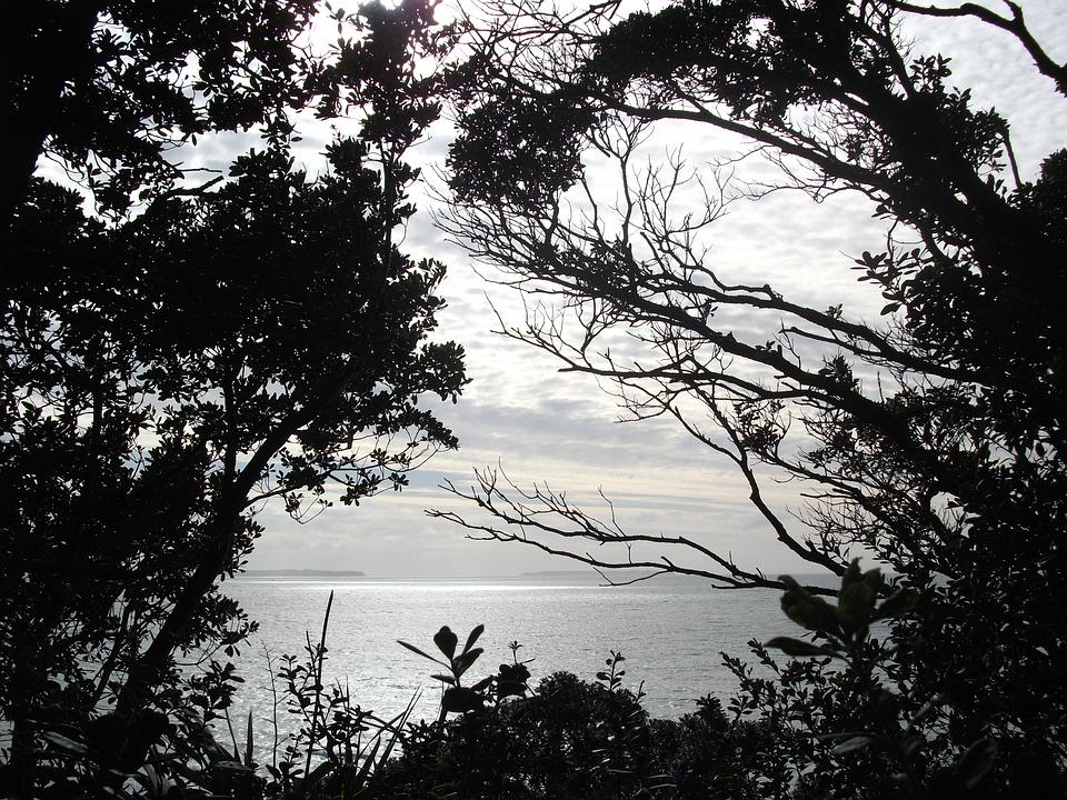 Trees, Ocean, Sea, Nature, Water, Sky, Coast, Shore