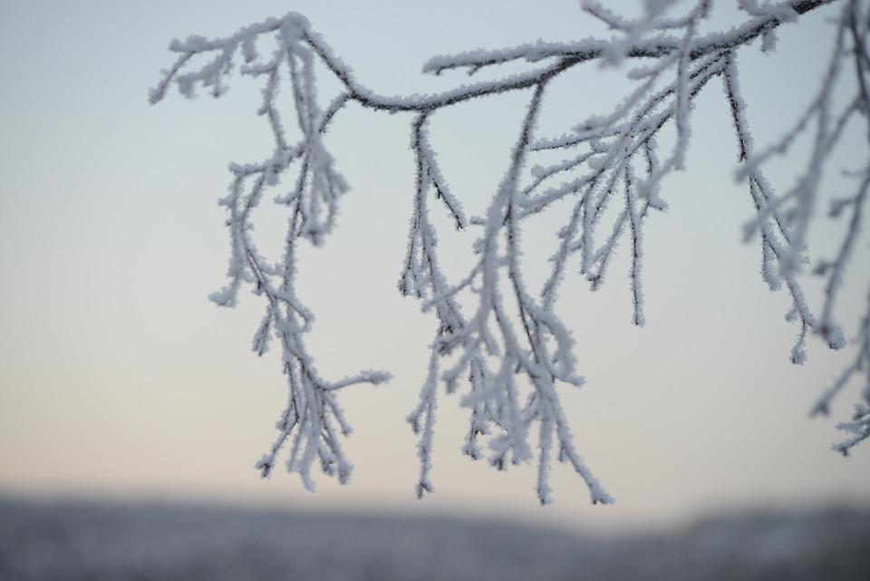 Winter, Snow, Landscape, Trees, Wilderness, White