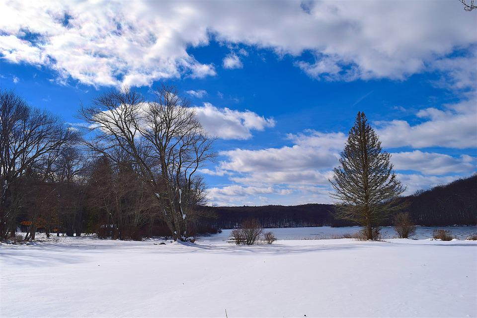 Snow, Trees, Sky, Clouds, Blue, White, Winter, Cold