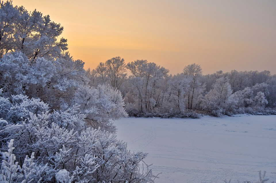 Snow, Trees, Sunset, Winter, Christmas, Branches, Cold