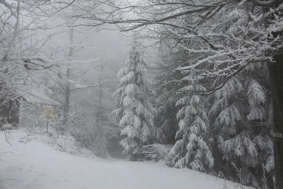 Winter, Forest, Snow, Nature, Trees, Landscape, Wintry
