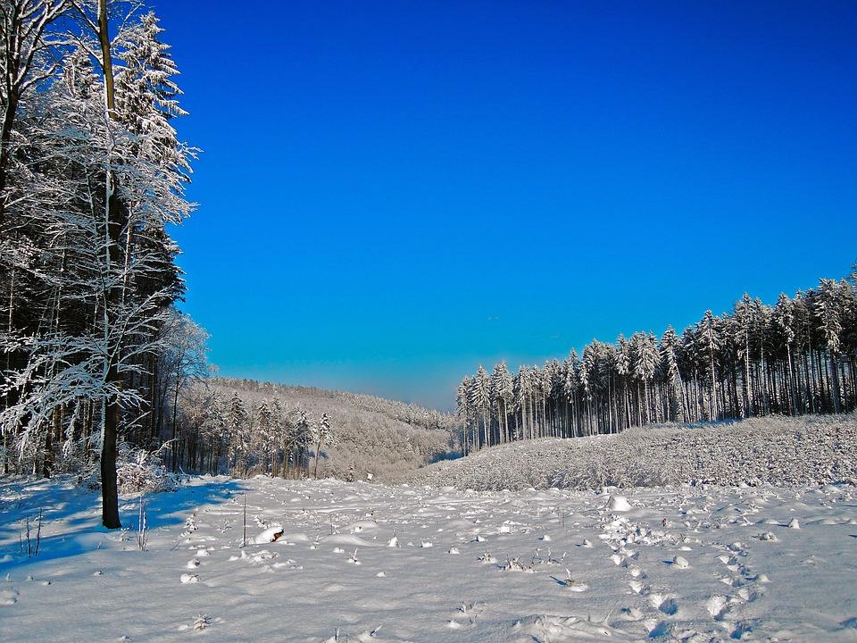 Winter, Panorama, Snow, White, Blue, Trees, Blue Sky