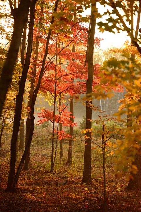 Trees, Forest, Woods, Trai, Path, Fall Season