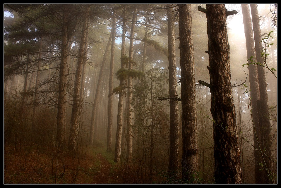 Trees, Fog, Forest, Woods, Wooden, Morning, Dawn, Foggy