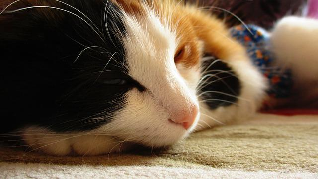 Cat, Kitten, Furry, Tail, Fur, Large, Trekhchastny