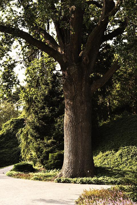 Tree, Tribe, Log, Wood, Forest, Tree Bark, Bark