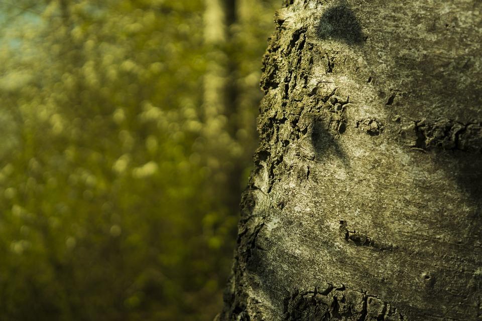 Free photo Texture Nature Tree Trunk Tree Bark Rough Wood - Max Pixel