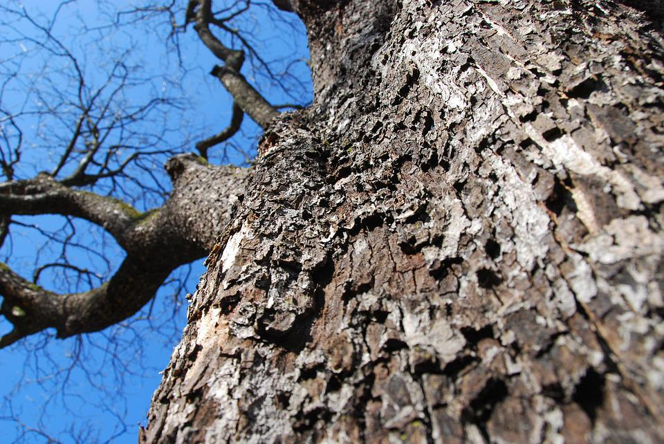 Tree, Tree Bark, Bark, Tribe, Structure, Nature, Wood