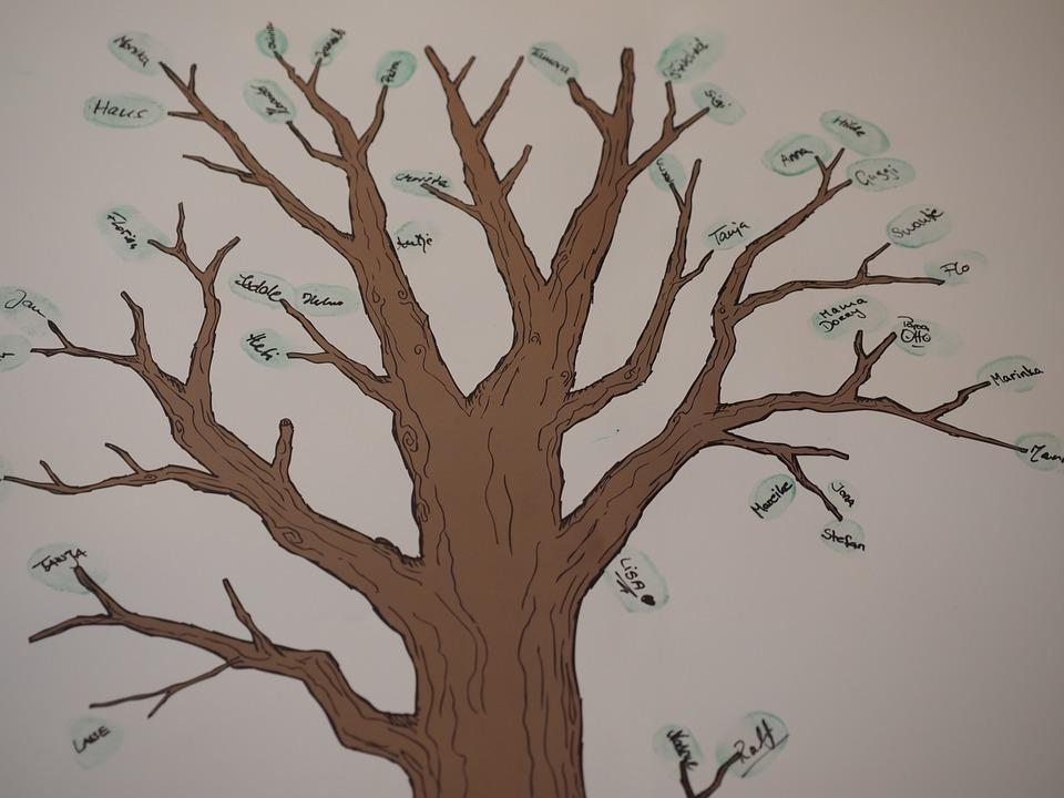 Tree, Family Tree, Branch, Tribe, Ancestry, Friends