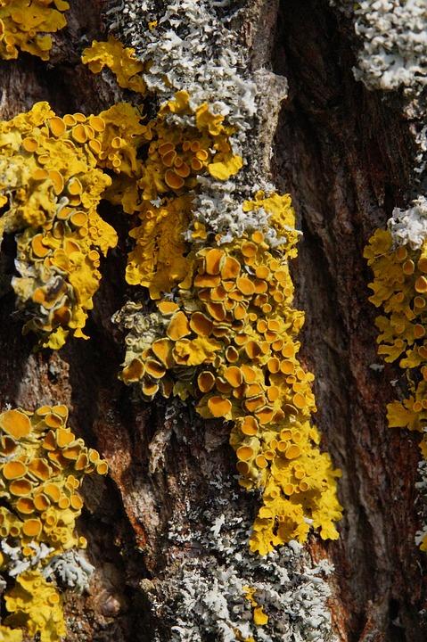 Tree, Lichen, Wood, Bark, Log, Nature, Tribe, Tree Bark