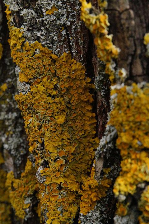 Tree, Lichen, Wood, Bark, Log, Nature, Tribe, Tree Bark