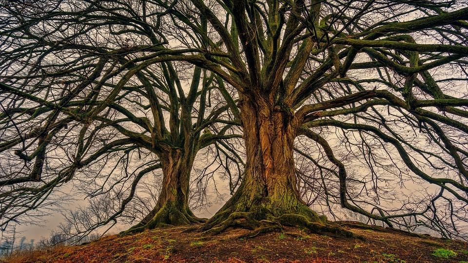 Tree, Nature, Wood, Kahl, Log, Tribe, Aesthetic