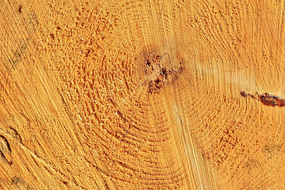 Log, Tribe, Tree, Wood, Thicker Stem, Grain, Like