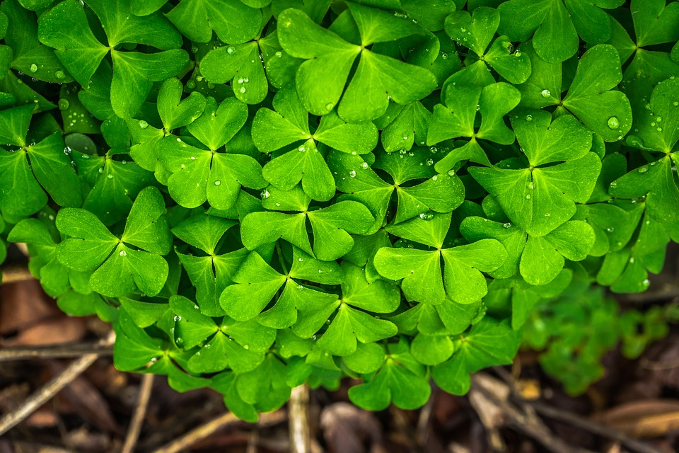 Leaf, Nature, Green, Spring, Abstract, Plants, Trickle