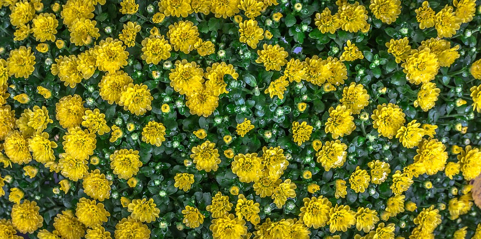 Flowers, Nature, Yellow, Abstract, Plants, Trickle, Dew