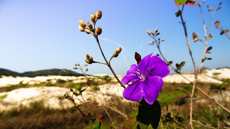 Flower, Winter, Dunes, Pond Conceição, Trip, Nature