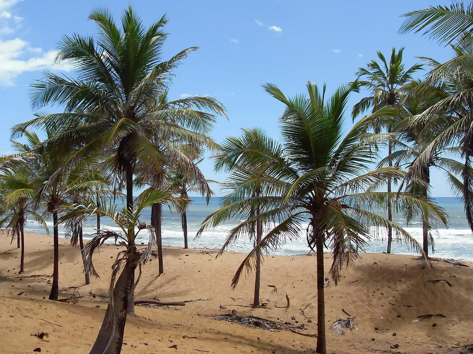 Brazilwood, Coconut Trees, Dunes, Atlantic, Tropical