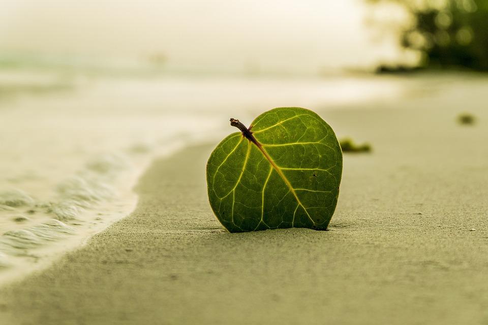 Beach, Leaf, Green, Nature, Summer, Tropical, Sand